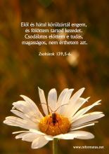 Zsoltárok 39,5-6
